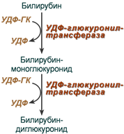Синтез глюкуронид-билирубина