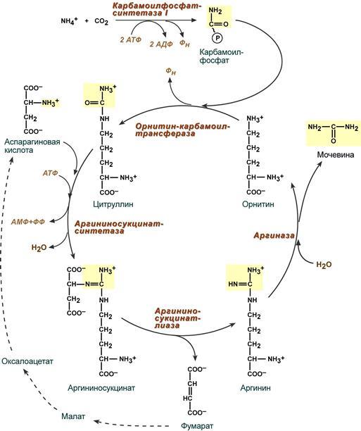 S05-29-sintez-mocheviny
