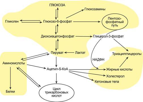 Взаимосвязь обмена белков