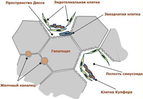 Схема принципиальных структур