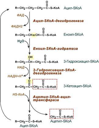Реакции бета-окисления жирных