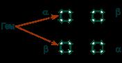 Гемоглобин состоит из белковой и небелковой части thumbnail