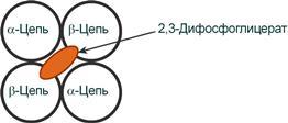 Расположение 2,3-дифосфоглицерат в гемоглобине