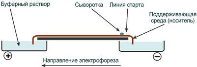 Прибор электрофорез белков