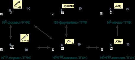 Активные и рабочие формы фолиевой кислоты